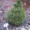 Nurga puukooli enda aretatud elupuu